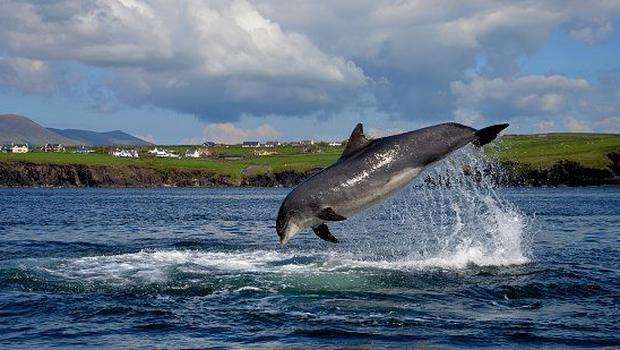 Dolphin spotting in Kerry