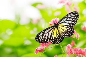 Why not go butterfly spotting in Kildare?