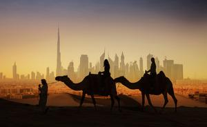 Camels in Dubai. Photo: Getty