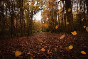 Autumn walks in Co Roscommon