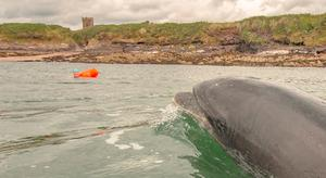Nuala Moore and Fungie in Dingle Harbour. Photo: Paul Britten