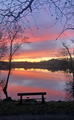 """""""The country had closed down and everything was very uncertain,"""" says Vera Gorman. """"I was out of work, I couldn't visit family, couldn't see friends. Thankfully this beautiful walk down at Lough Muckno in Castleblayney, Co Monaghan was in my 5km."""""""
