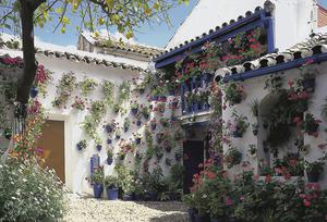 Colourful flowers cover the whitewashed walls fo a Cordoba property.