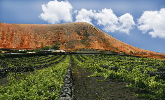 What a corker: A vineyard in the La Geria volcanic region of Lanzarote,