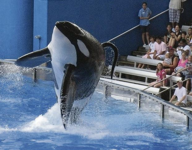 MAKING A SPLASH: Sea World