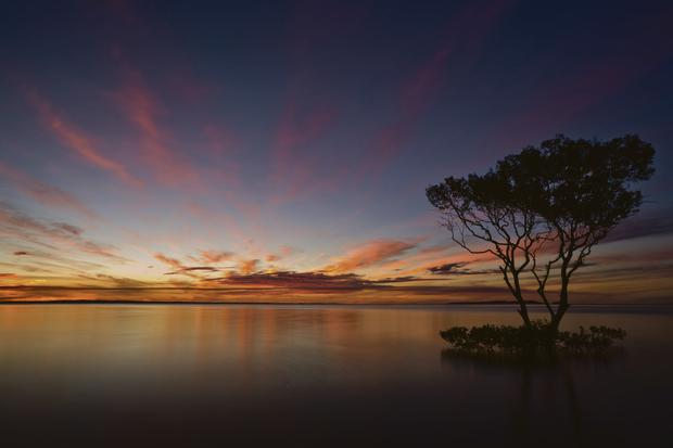 Lone mangrove tree. PICTURE: Mark Keelan