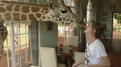 MORNING KISS: Ed the giraffe greets Madeleine's daughter Julia at Giraffe Manor in Nairobi, a hotel and sanctuary for the long-legged animals established in 1979. The hotel includes an education centre where guests can feed and learn more about the animals