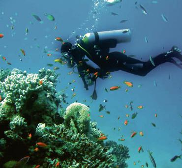 SPECTACULAR: David Attenborough described the Red Sea as amongst the most beautiful places in the world. This colourful paradise features a number of reefs, including the St John's reef system, which is a world-class diving site, normally only reachable by boat