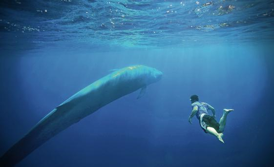 The photo by Patrick Dystra of one lucky person snorkelling off the coast of Sri Lanka.