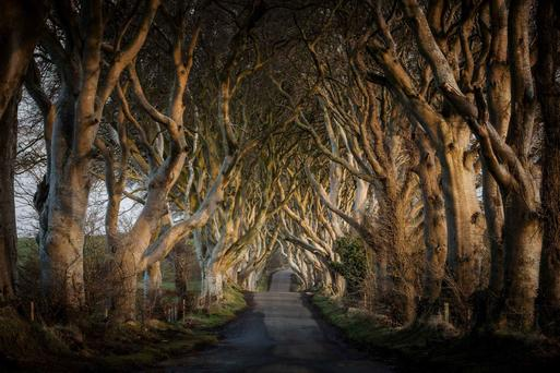 The dark hedges in Co Antrim