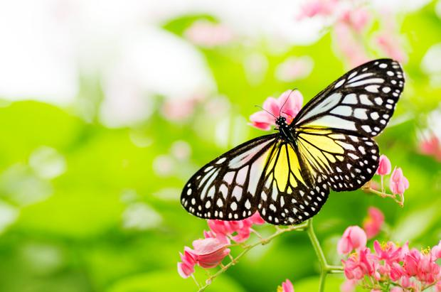 Butterfly populations have tumbled by almost a half (48%) since 1990 in England.