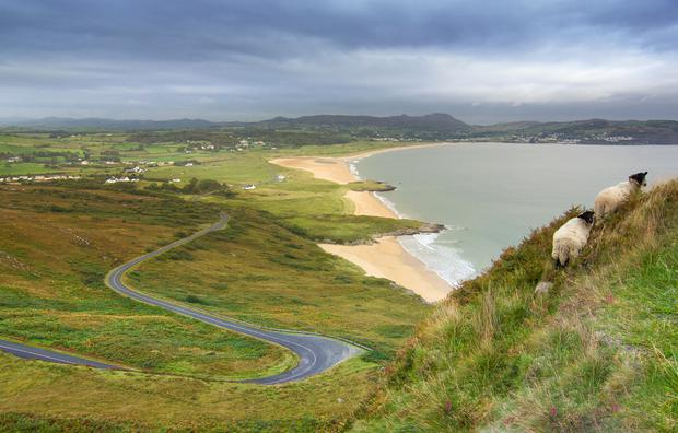 Sheep near Portsalon Beach, Co. Donegal. Photo: Getty