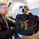 "F. Andy Messing Jr. checks in at an airline counter with his pet ""Dick the Dog"" for a flight to St. Petersburg, Florida. File Photo: Manny Ceneta/Getty Images"
