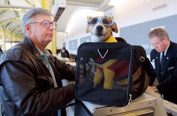 Travelling With Pets Which Airlines Take Dogs And Cats On Board