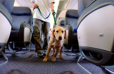 Travelling with pets: Which airlines take dogs and cats on