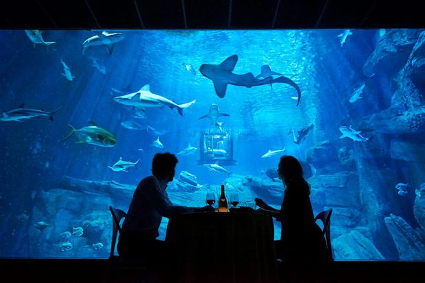 Dinner in Airbnb's first underwater bedroom, at the Aquarium de Paris