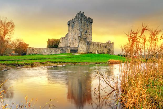 The fringed water lily is affecting the bays around Ross Castle Photo: Deposit