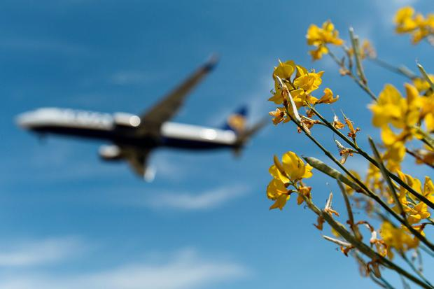 A Ryanair plane takes off at Barcelona's El Prat. Photo: JOSEP LAGO/AFP/Getty Images