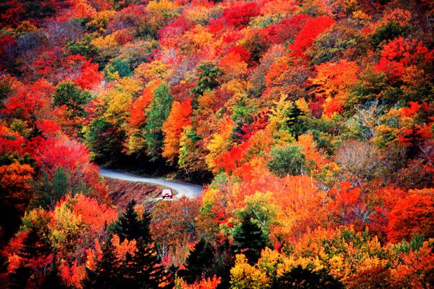 Fall Foliage Five Top Tips For Leaf Peeping In New