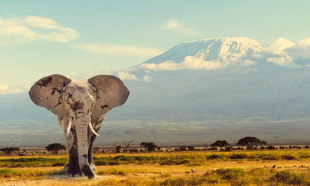 An elephant stands with Kilimanjaro in the background. Photo: Deposit