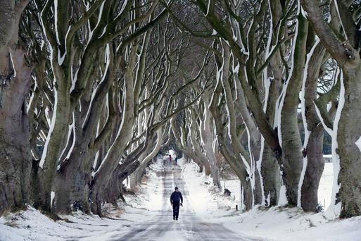 A man walks along the Dark Hedges. Photo by Charles McQuillan/Getty Images)