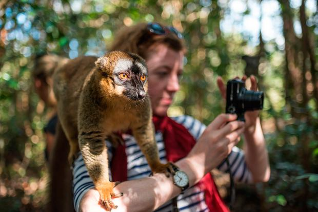 Sophie with a Common Brown Lemur (Eulemur fulvus) on Lemur Island, Andasibe, Eastern Madagascar. Photo: www.matthewwilliams-ellis.com