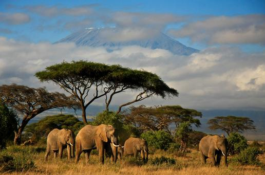 Will 2017 be the year you go on safari to Africa and spot elephants on the foothills of Kilimanjaro?