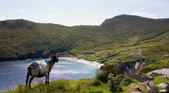 Keem Bay, Achill Island. Photo: Fáilte Ireland