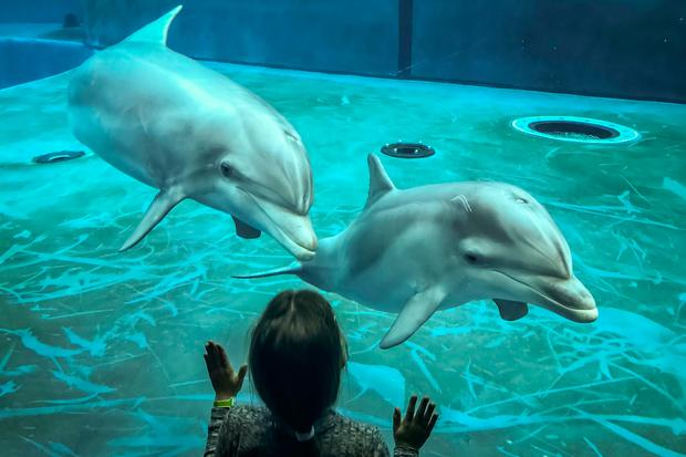 Meeting dolphins at the Aquarium of Genoa. PA Photo/Warren Chrismas.