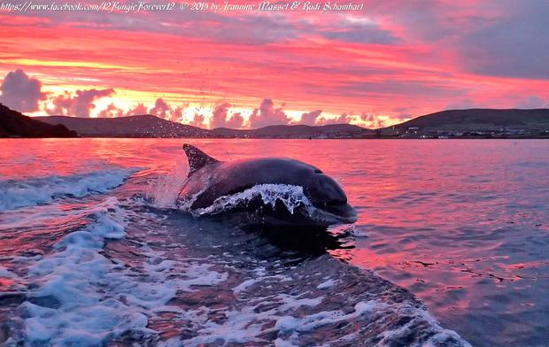 Fungie at sunset. Photo: Jeannine Masset & Rudi Schamhart. See facebook.com/12FungieForever12 for more.