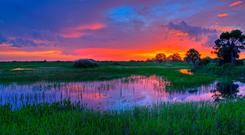 Florida Everglades - there is much to see in the Sunshine State