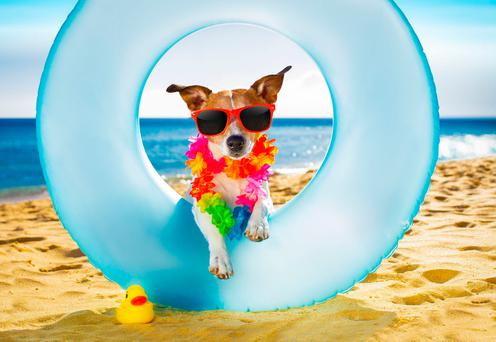 A dog relaxing on a sunny beach. PA Photo/thinkstockphotos.