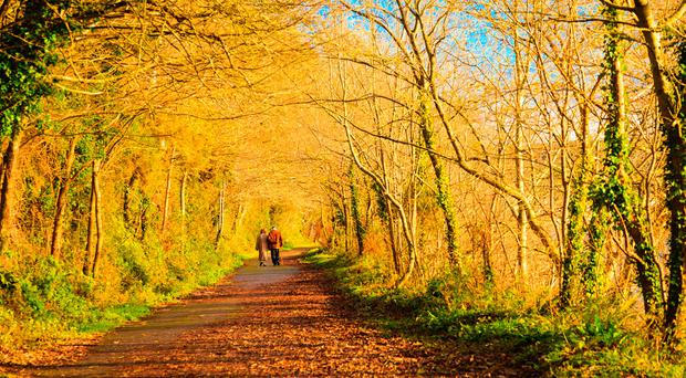 Ireland's Autumn Bucket List: 25 amazing things to see and do this season!