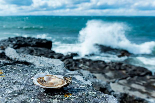 Taste the Atlantic is a new seafood trail on the Wild Atlantic Way