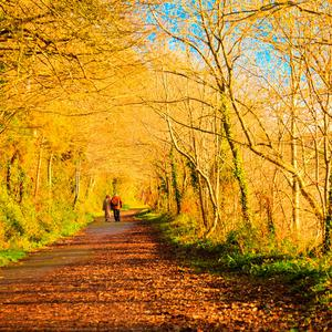 Autumn weather makes its first appearance later this week