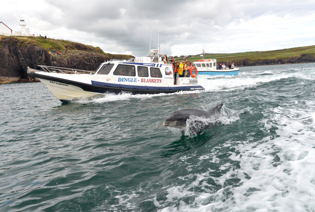 Fungie, Dingle Dolphin Tours DSC_7441.png