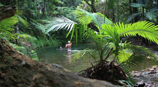 Cooling down at a swimming hole in Daintree National Park, near Cape Tribulation in northern Queensland