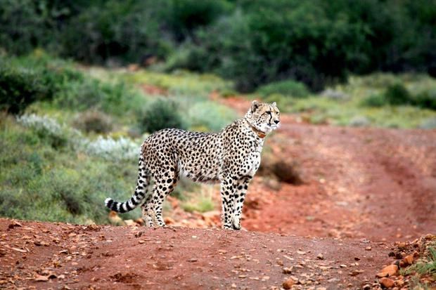 Sundowners, cities and safaris in South Africa's Eastern