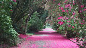 Pretty in pink –the Broad Walk at Kilmacurragh Botanic Gardens