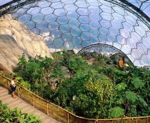 A Rainforest Biome in The Eden Project