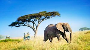 An African elephant crossing the plains of the Serengeti