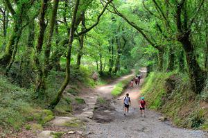 Walking through oak woodland on the final stretch of the French Way. Photo: Pól Ó Conghaile