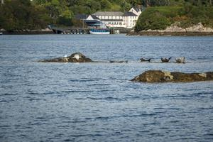 The seals of Glengarriff, Co Cork, hauled out on the rocks. Picture by Chris Hill
