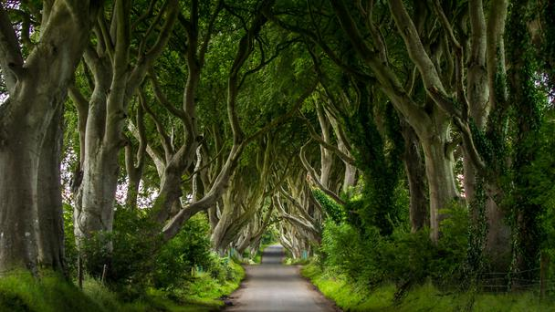 The Dark Hedges, Northern Ireland in Game of Thrones.