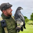 Falconer Jason Deasy with Indigo
