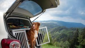 Dog-friendly travel is growing in popularity (stock image)