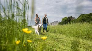 Best in class – our woof guide to the best dog-friendly Irish hotels