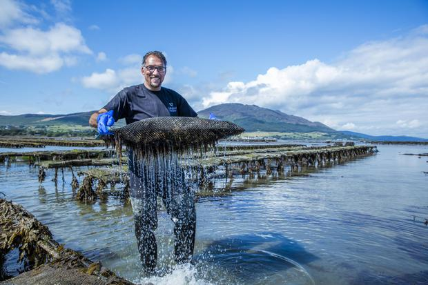 Kian Feisser of Carlingford Oyster Company, part of the Sea Louth Seafood Trail