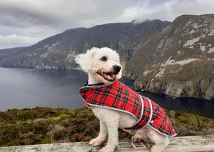 Thomas Cahalan's first visit to Slieve Liag, Co Donegal was special... his dog Harry got to show off his new coat