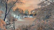 Frozen Central Park in New York - trips to the city are back.